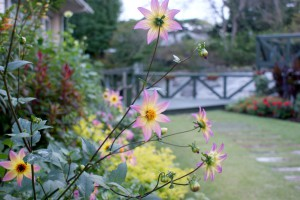 1610 秋ガーデン02