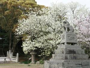 midoriyoshino1