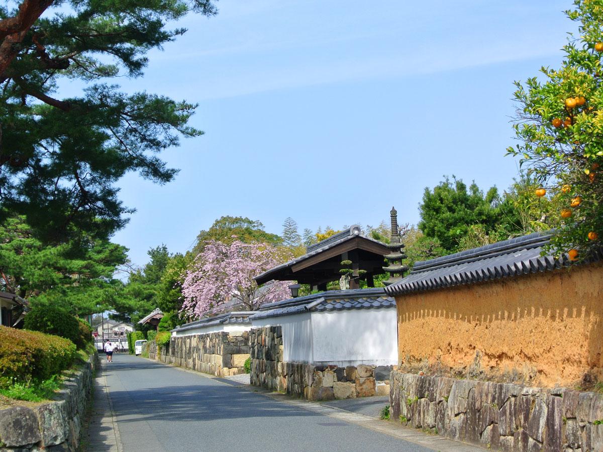 【世界遺産/萩城下町散歩】の画像