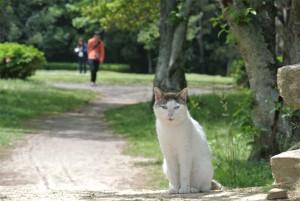 石彫公園のジロー