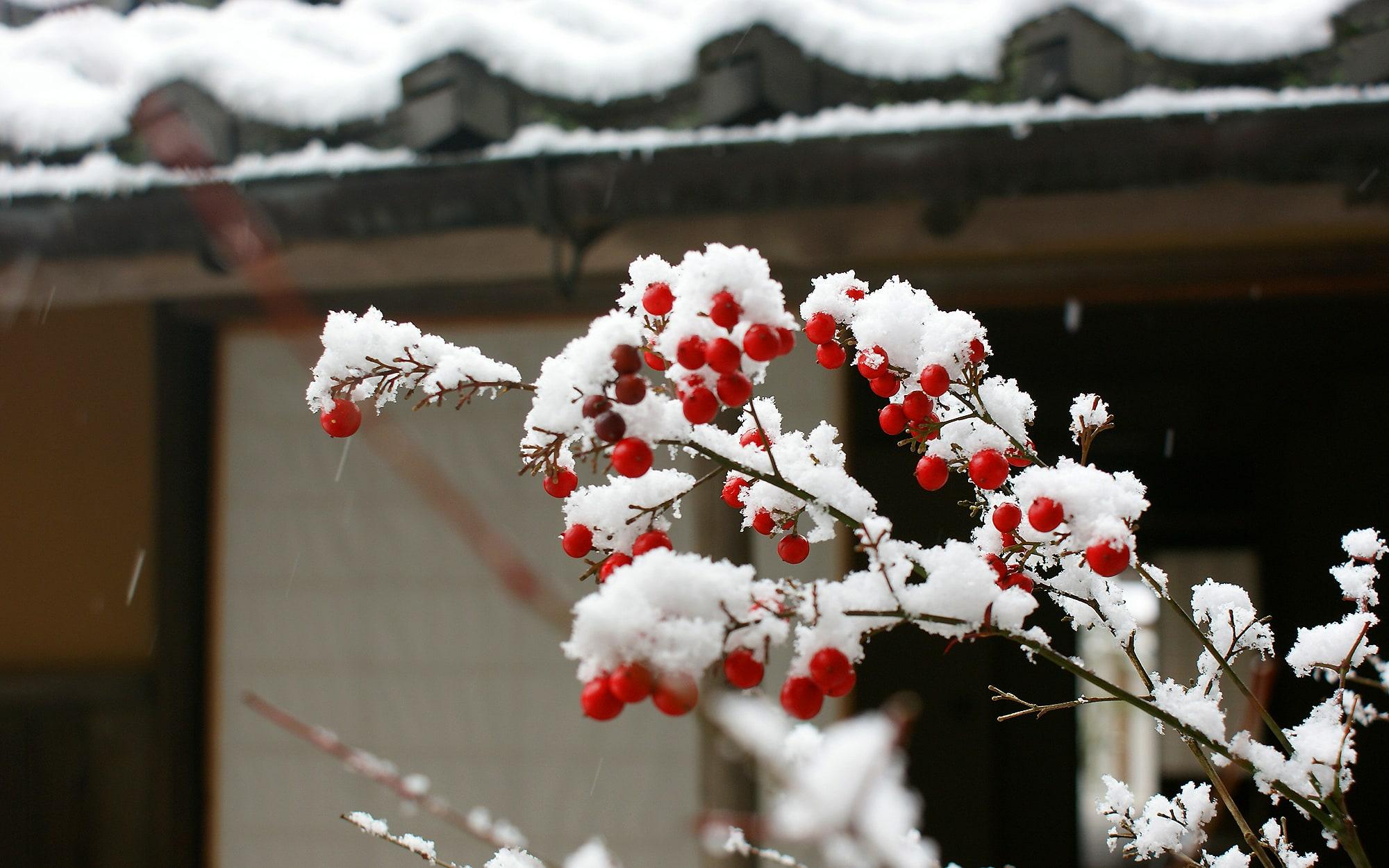 雪景色 - 山口県 萩市|世界遺産[萩城下町]唯一の旅館 萩城三の丸 北門屋敷